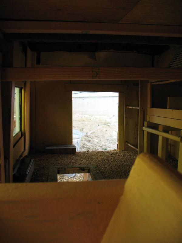 chicken coop roost. Inside the coop Inside coop
